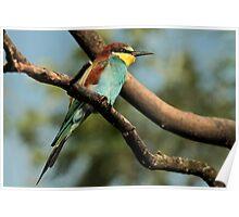 Colourful Bird Poster