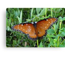 Butterfly ~ Queen Canvas Print