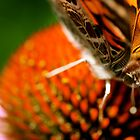Butterfly Face To Face by patti4glory