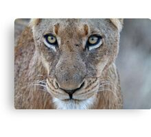 Look Into My Eyes.... You Are Getting Sleepy... Canvas Print