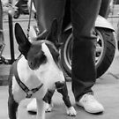 Dog on the street #14 by Jean-Luc Rollier