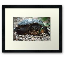 The Old Snapping Turtle Framed Print