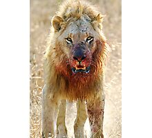 Majingilane - Male Lion - Hyena Intimidation Photographic Print