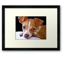 Portrait of a Pet Framed Print
