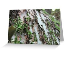 Mossy Birch Bark | Wisconsin Woodlands Greeting Card