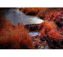 Autumn Grasses  Photographic Print