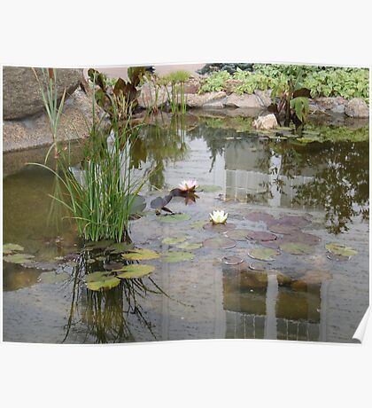 Reflections in a lily pond Poster