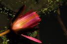Surrender unto Love by Prasad