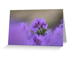 A meadow of cranesbill Greeting Card