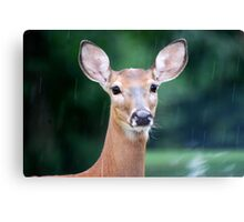 Deer Me, I Think it is Going to Rain Canvas Print