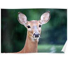 Deer Me, I Think it is Going to Rain Poster