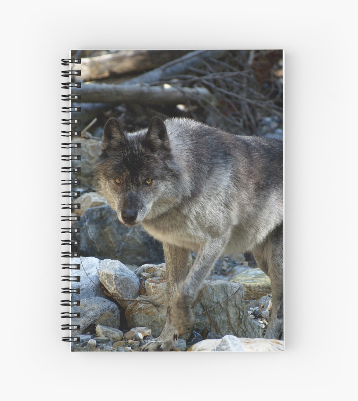 """""""Vision Quest""""  Grey Wolf by NaturePrints"""
