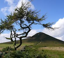 Roseberry Topping by mikebov