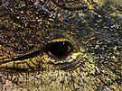 Croc by Carol Bleasdale