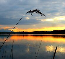 Sunset over Bannwaldsee by ©The Creative  Minds