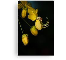 Wise Knights Canvas Print