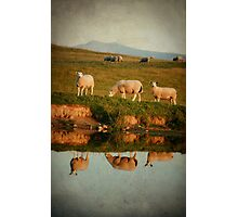 Meeegan, Baaabra and Woolamina Photographic Print