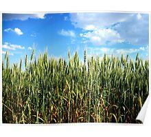 Green Wheat - Mansfield, Washington USA Poster