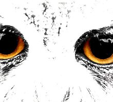 Owl Eyes by Claire Gibbs