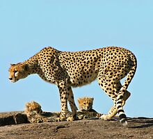 Under Mom's watchful eye by Owed to Nature
