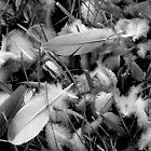Broken Wings by lilynoelle