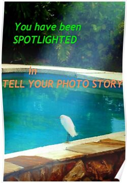 Photo Story banner by ♥⊱ B. Randi Bailey
