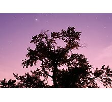Starry Night Twilight Tree in Purple Sky Photographic Print