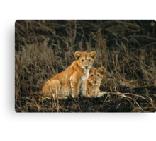 Twin gazes Canvas Print