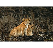 Twin gazes Photographic Print