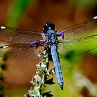 Bright Blue Dragonfly by patti4glory