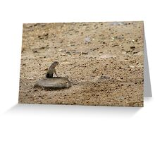 """Where's my beer?"" Lizard  Greeting Card"