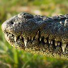 Chobe National Park, Botswana. 2009 by Damienne Bingham