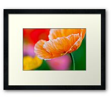 Poppy Time Framed Print