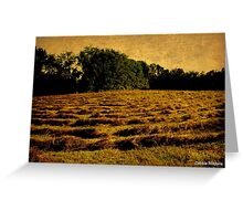 Hayfield of Gold Greeting Card
