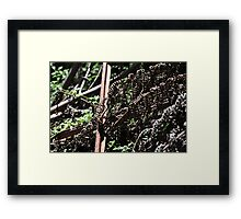 New Life - Regrowth after Black Saturday Framed Print