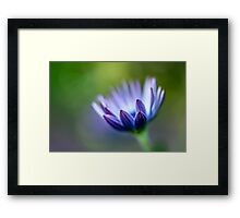 Purple Focus Framed Print