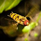 Hoverfly in flight by Shehan Fernando