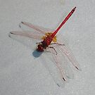 Red Dragonfly I by taiche