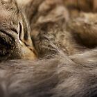 Cat Sleeping by Michelle Dewis