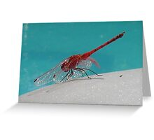 Red Dragonfly III Greeting Card