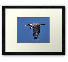Li'l Blue Framed Print