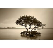 Mangrove Tree in Sepia Photographic Print