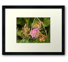 A fiery pair for sure. Framed Print