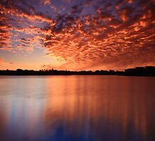 Reflected Glory by Ann  Van Breemen