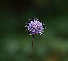 Zen - Forest flower by rvbpixels