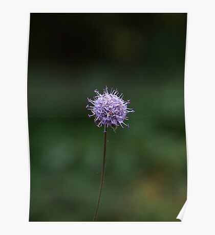 Zen - Forest flower Poster