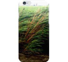 Wild Wind iPhone Case/Skin