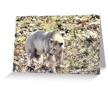 Rare Kermode Bear (Spirit Bear) Greeting Card