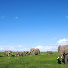 Elephants of Amboseli by Graeme Shannon