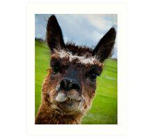 Wacky Alpaca Art Print